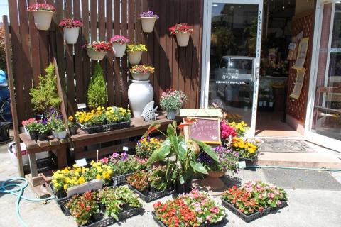 ガーデニング、苗もの、花壇、いわき市,小名浜,花屋,花国湘南台店
