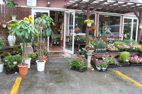 おはな、切り花、鉢物、いわき市,小名浜,花屋,花国湘南台店