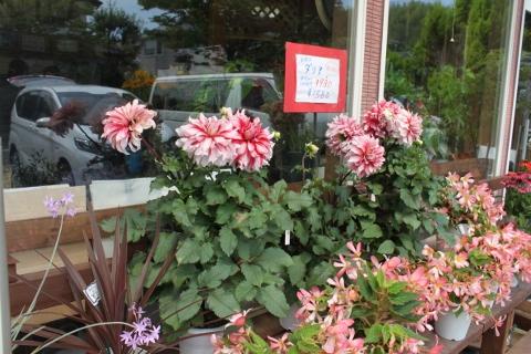 安い、おはな、切り花、鉢物、いわき市,小名浜,花屋,花国湘南台店