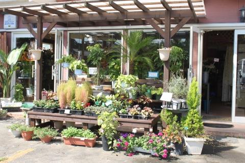 ガーデニング、観葉植物、グリーン、いわき市,小名浜,花屋,花国湘南台店