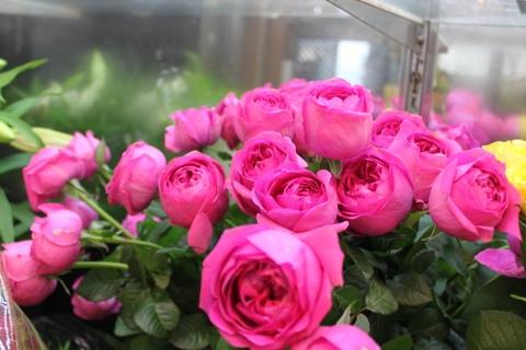 バラ、おすすめ、きれい、いわき市,小名浜,花屋,花国湘南台店