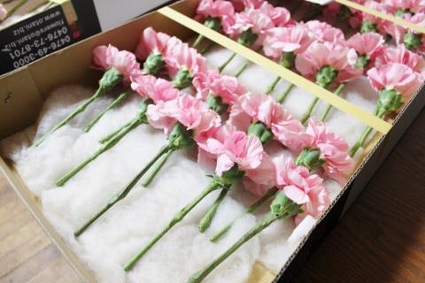 入学式、お花、いわき市,小名浜,花屋,花国湘南台店