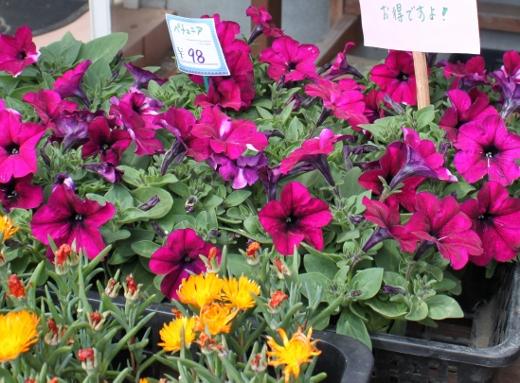苗もの、ガーデニング、観葉植物、いわき市,小名浜,花屋,花国湘南台店
