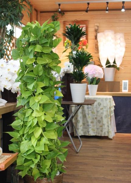 観葉植物、グリーン、いわき市,小名浜,花屋,花国湘南台店
