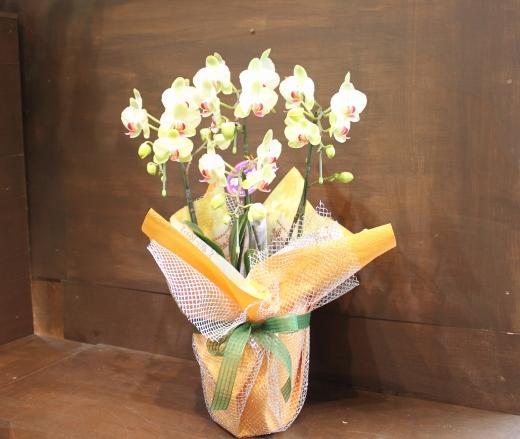お花、花束、アレンジメント、いわき市,小名浜,花屋,花国湘南台店