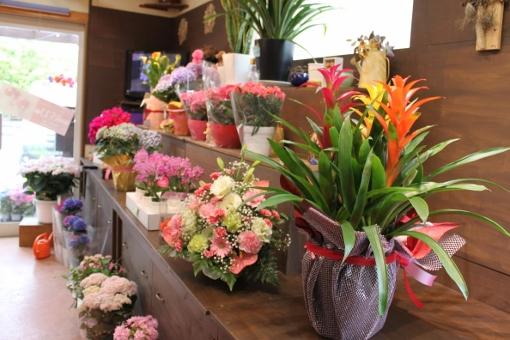母の日、いわき市,小名浜,花屋,花国湘南台店