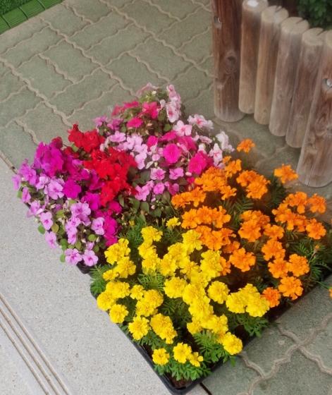 花国花復興プロジェクト、 いわき市,小名浜,花屋,花国湘南台店