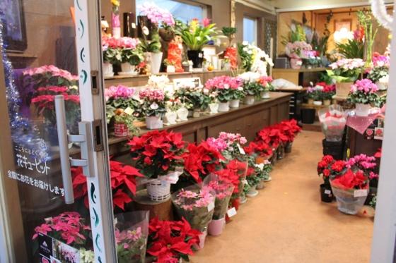 いわき市小名浜の花屋花国のお花の写真