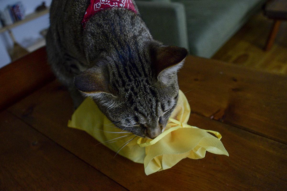 袋の匂いを嗅ぐキジトラ猫の虎ノ介