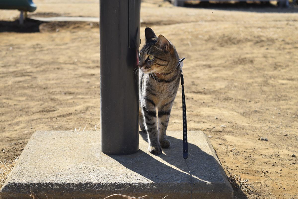 鳥をのぞき見するキジトラ猫の虎ノ介