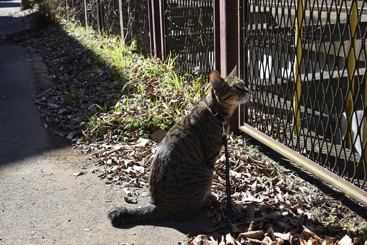 下から見上げるキジトラ猫の虎ノ介