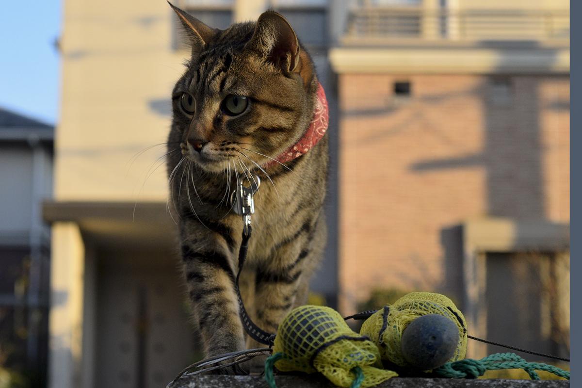 犬が去るのを見つめるキジトラ猫の虎ノ介