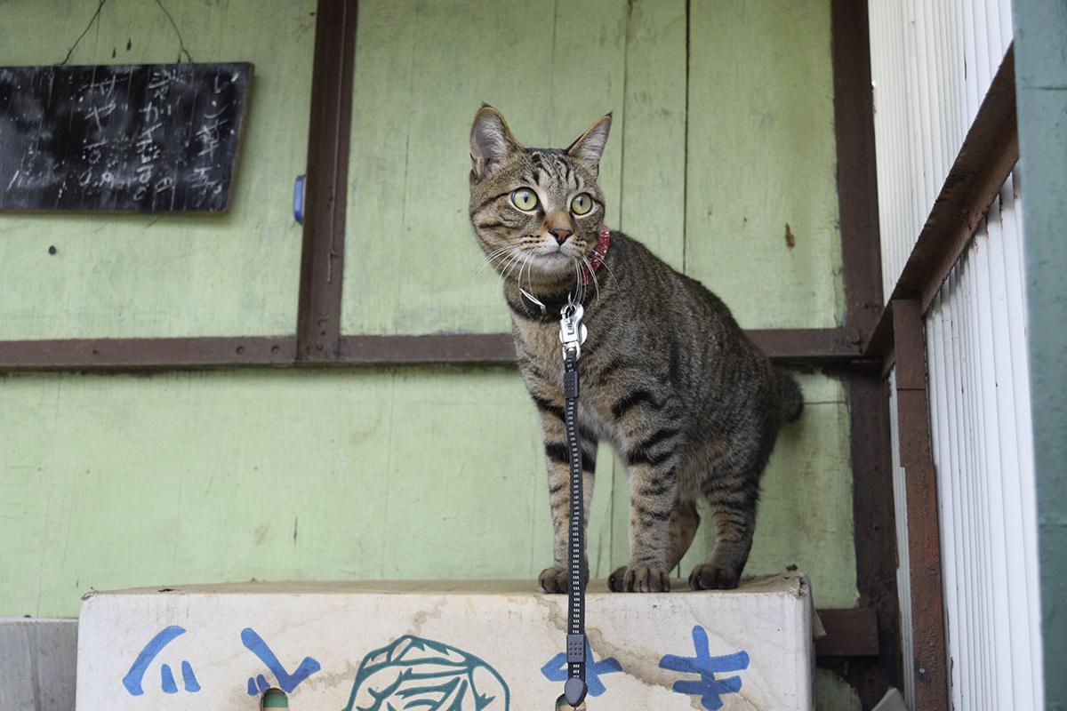 無人販売所を見つけたキジトラ猫の虎ノ介