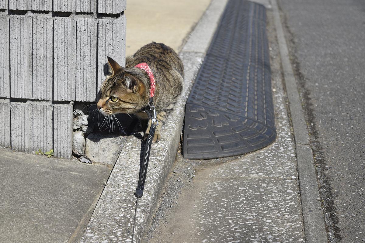 鳥を狙うキジトラ猫の虎ノ介