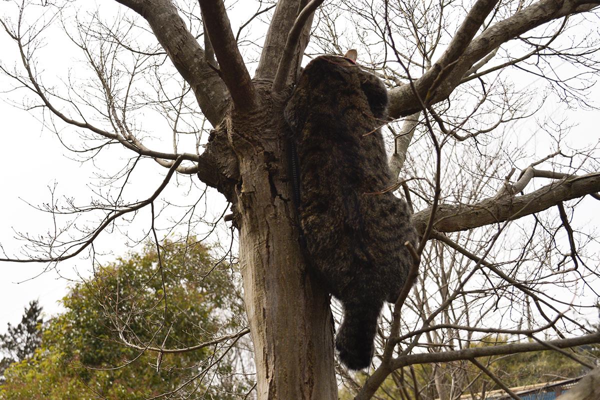 気によじ登るキジトラ猫の虎ノ介