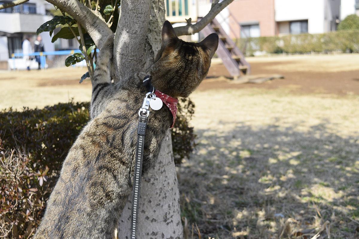 公園の様子をうかがうキジトラ猫の虎ノ介