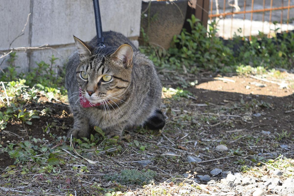 犬をみつめるキジトラ猫の虎ノ介