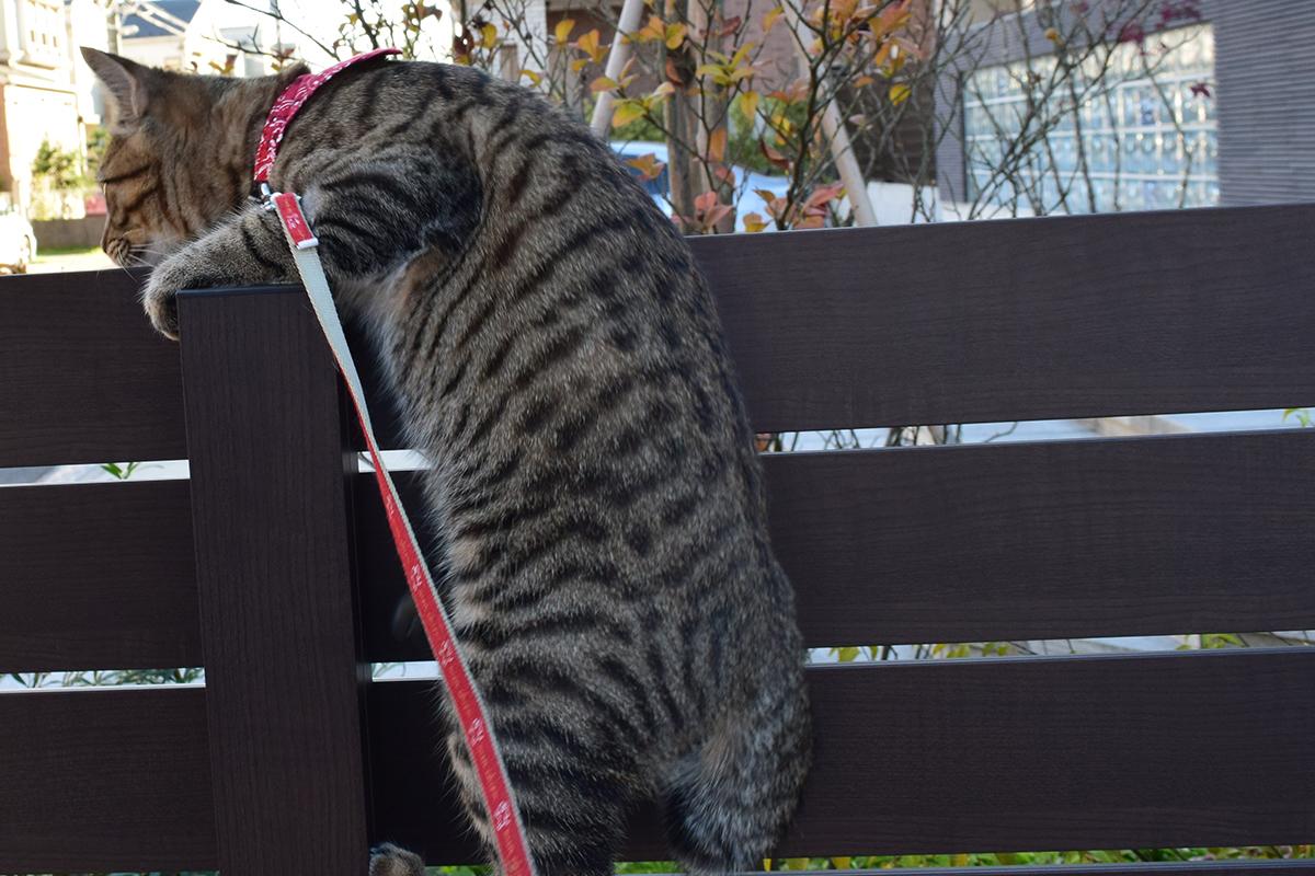 柱を登るキジトラ猫の虎ノ介