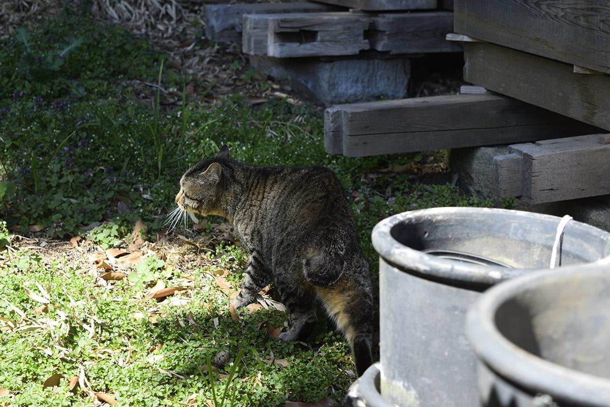 卵屋さんの庭で遭遇した猫