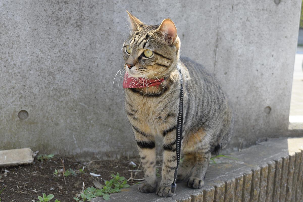 犬をみるキジトラ猫の虎ノ介