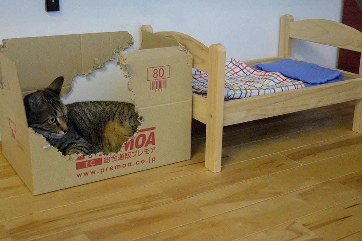 隣にある虎用ベッド