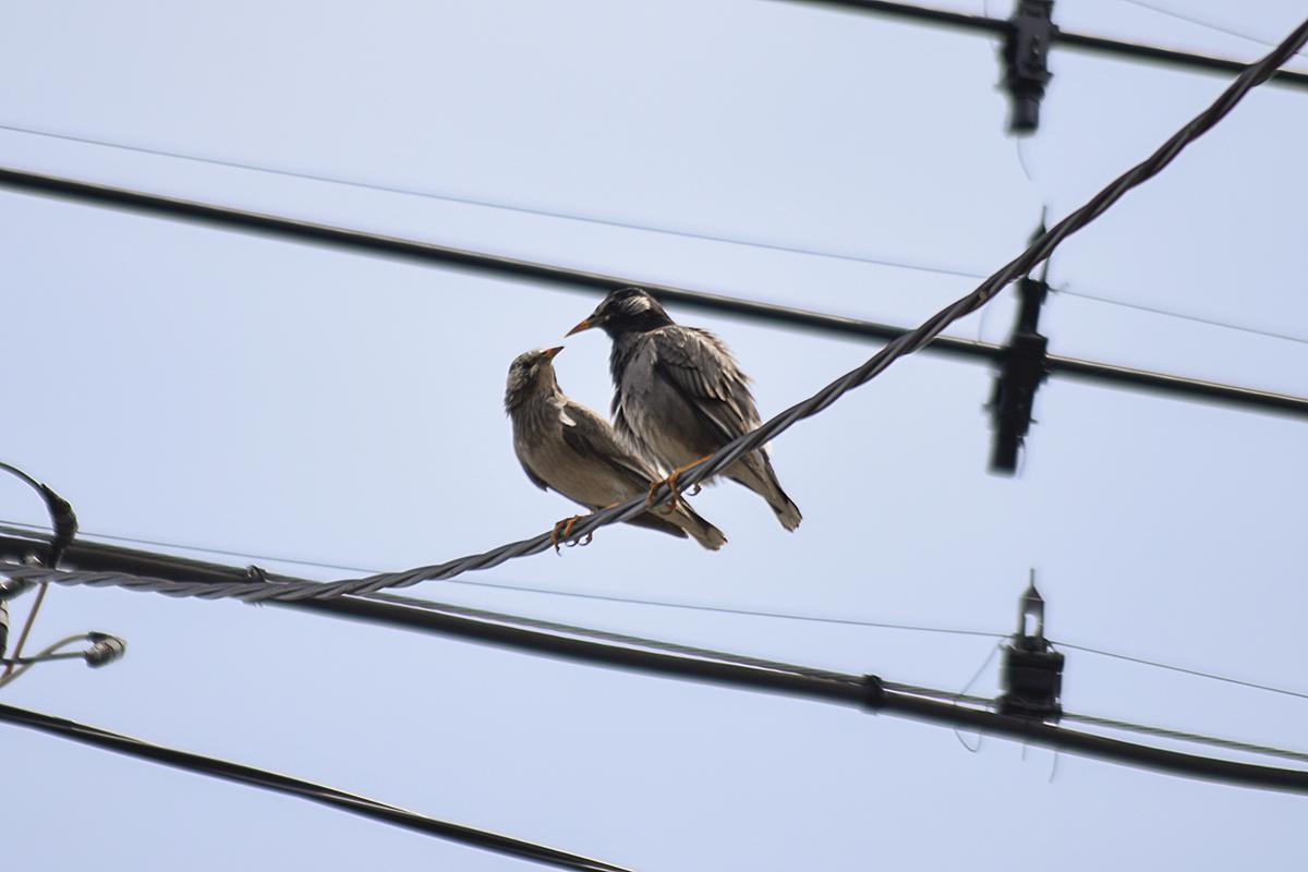 仲良しの鳥
