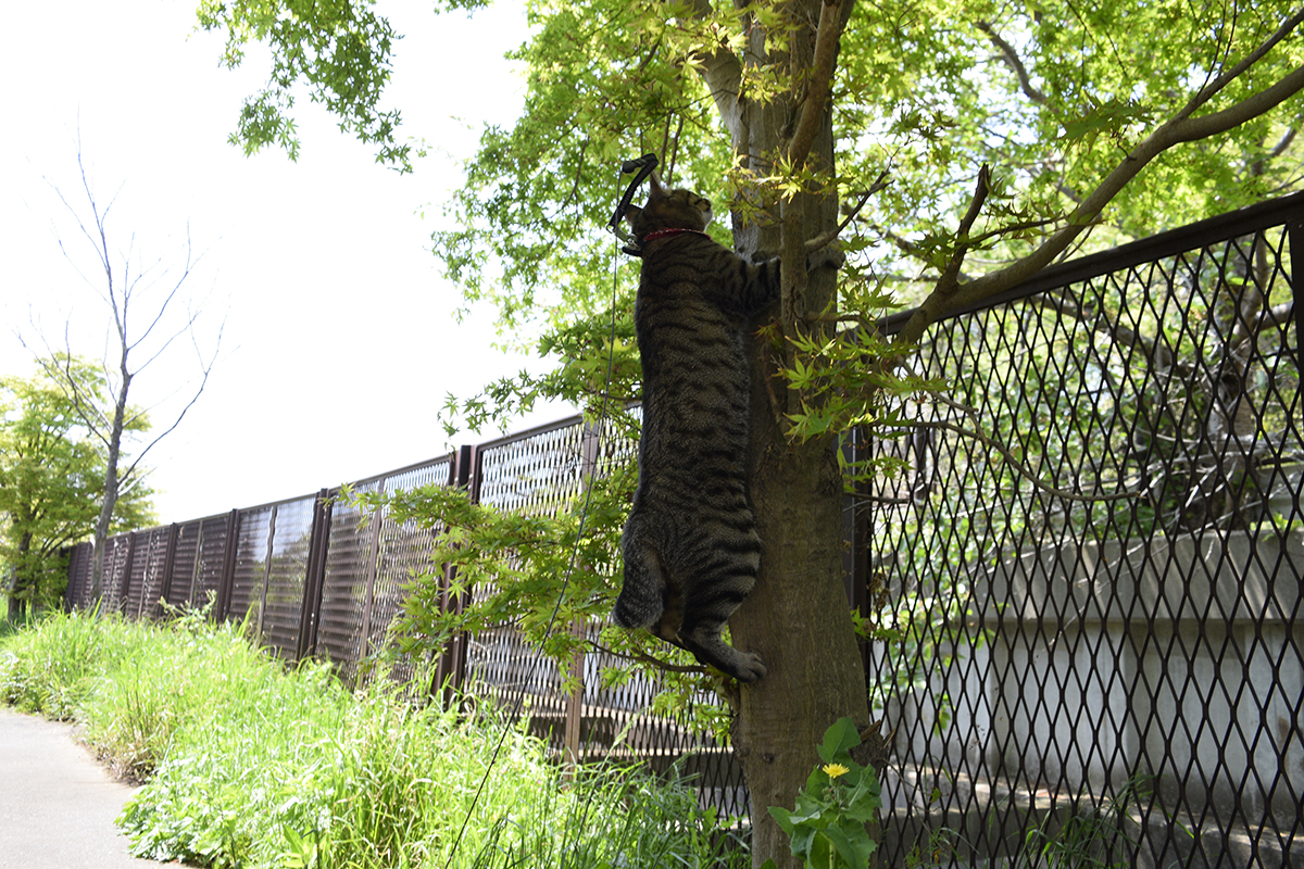 木の幹につかまるキジトラ猫の虎ノ介