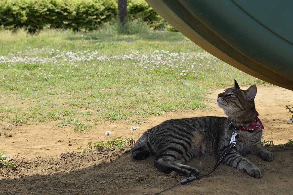 公園の滑り台の下に移動したキジトラ猫の虎ノ介