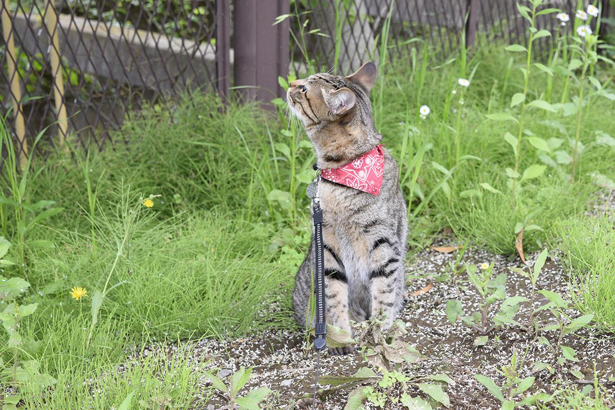 お外のにおいを満喫しているキジトラ猫の虎ノ介