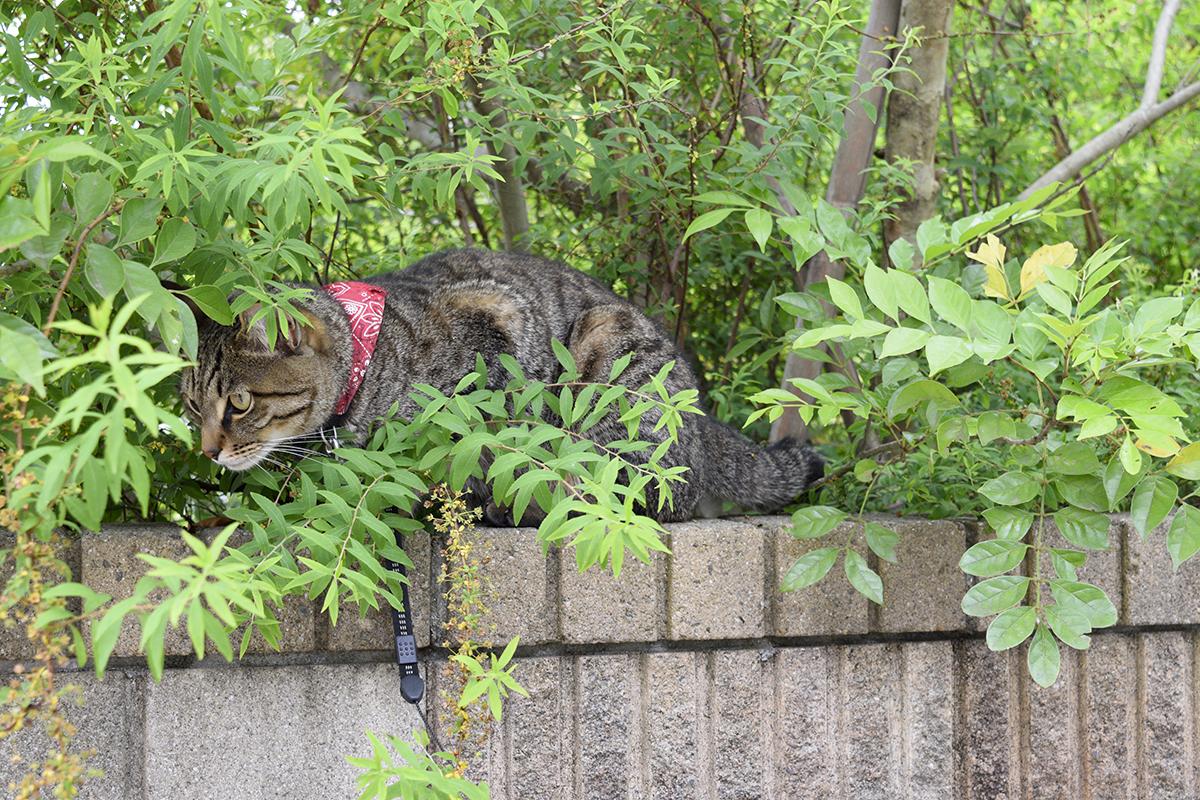 謎の人物を見下ろすキジトラ猫の虎ノ介