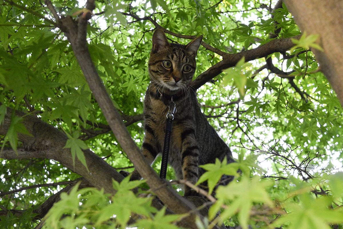 木の上から犬をみるキジトラ猫の虎ノ介