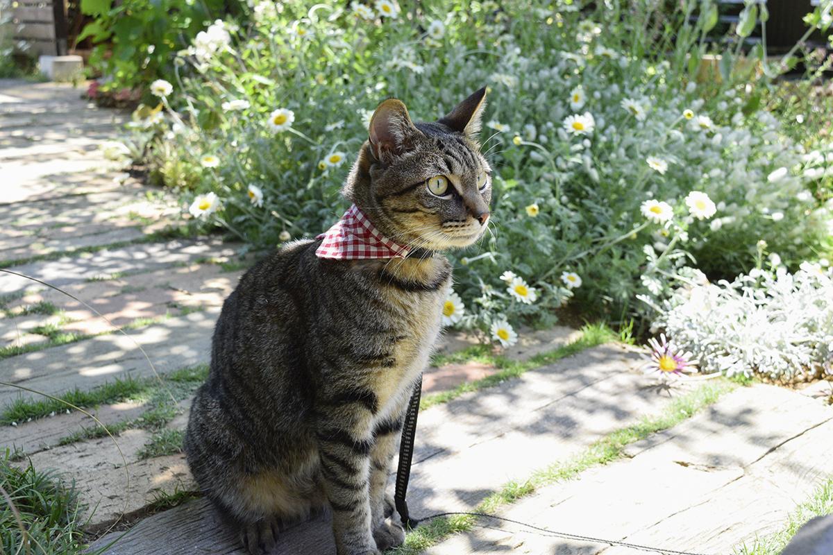 庭から鳥を見つめるキジトラ猫の虎ノ介