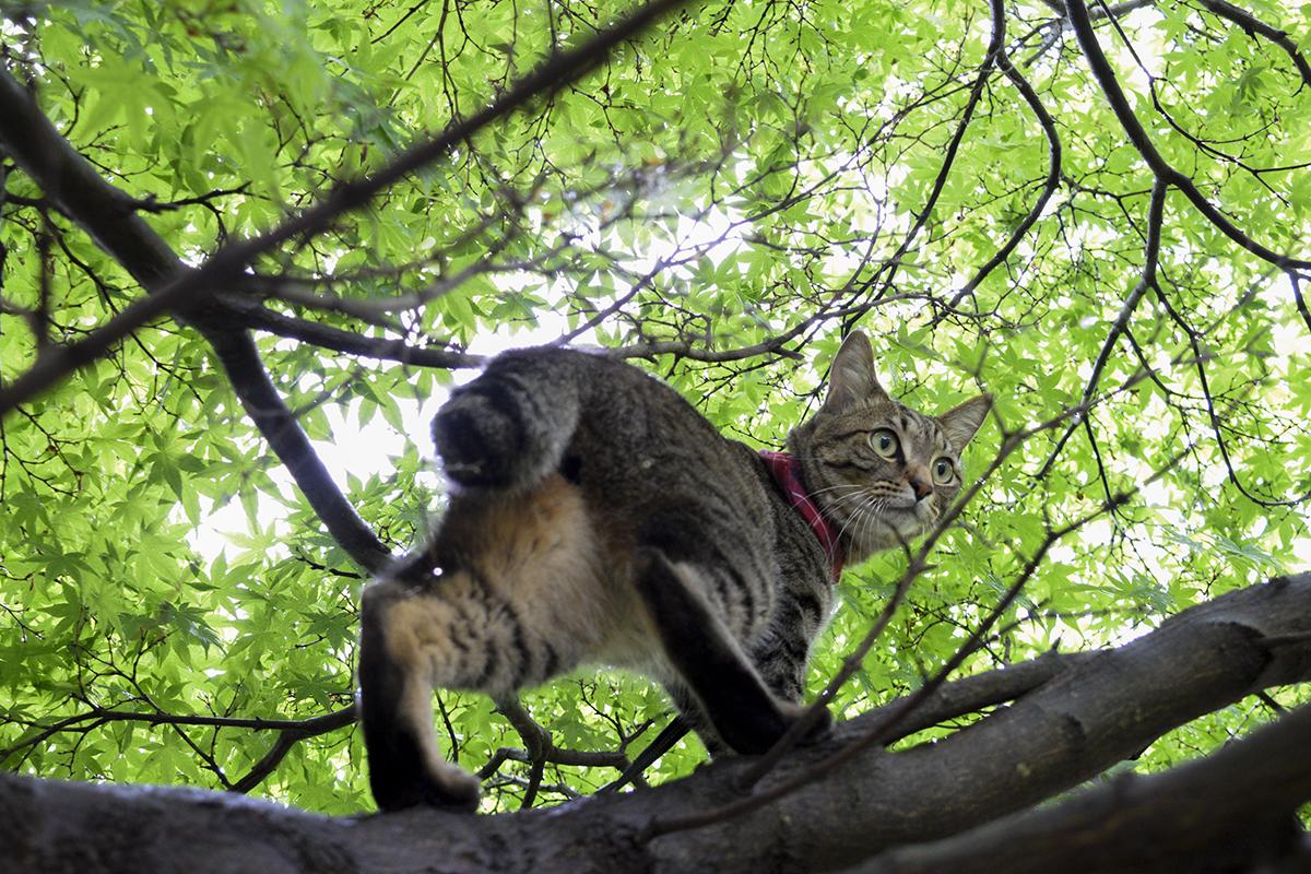 雀をおいかけるキジトラ猫の虎ノ介