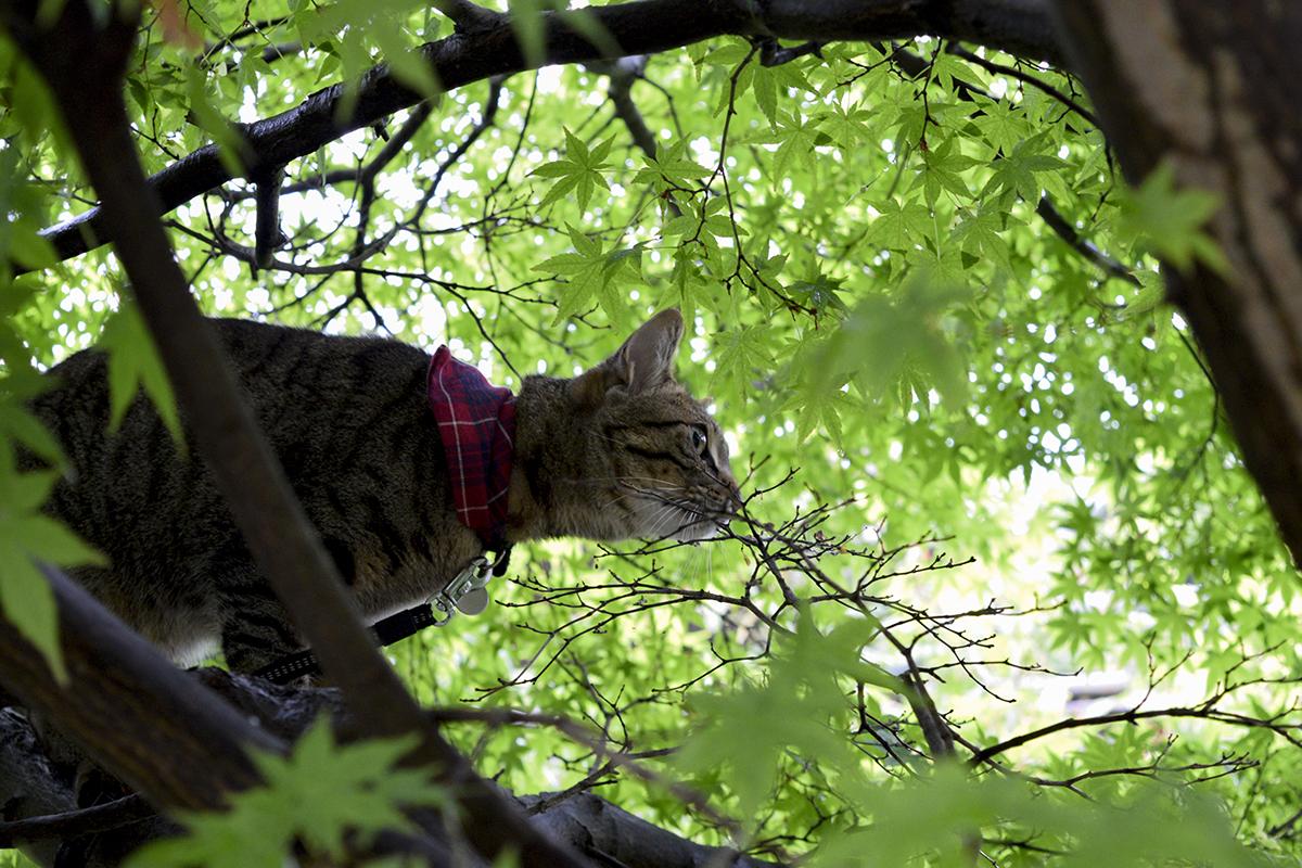 小雀をおいかけるキジトラ猫の虎ノ介