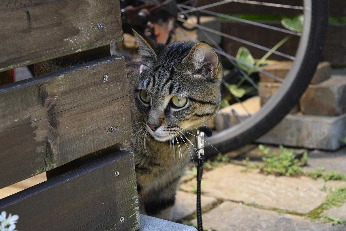 犬におびえるキジトラ猫の虎ノ介