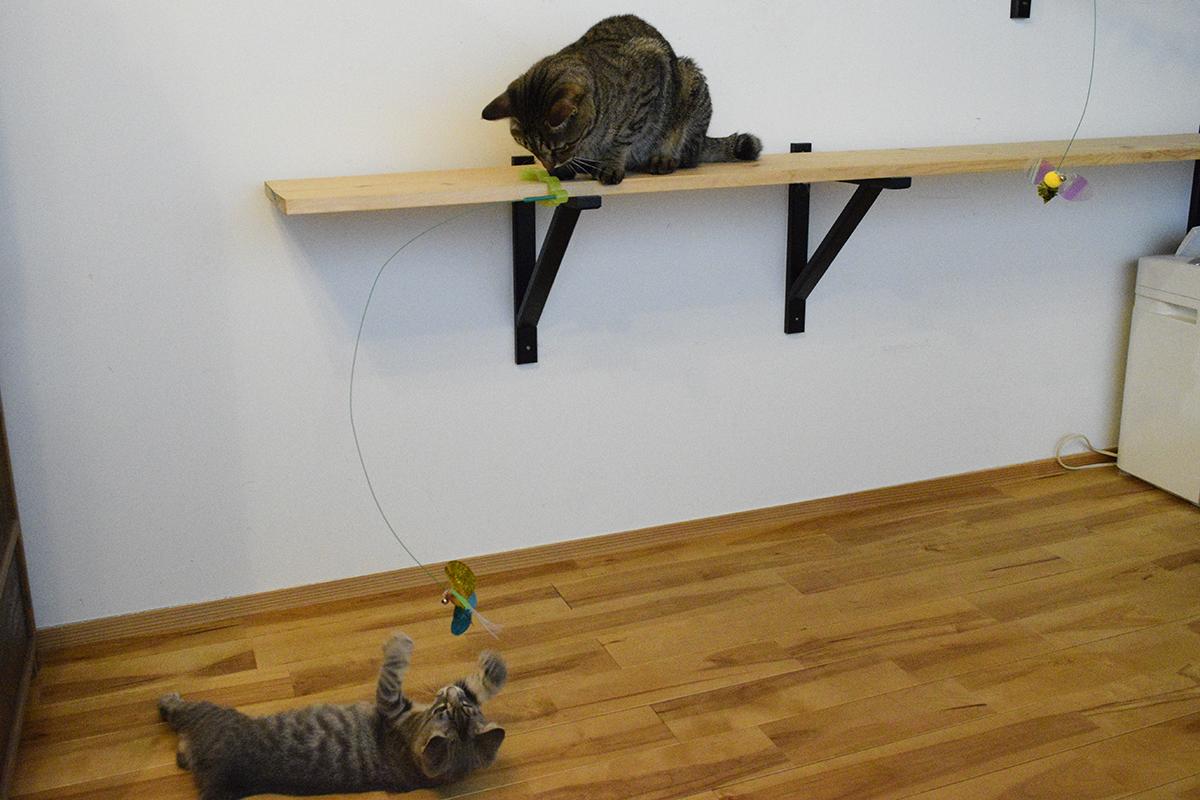 新しい猫じゃらしで遊ぶサバトラ猫の春太と付け根の部分をチェックするキジトラ猫の虎ノ介