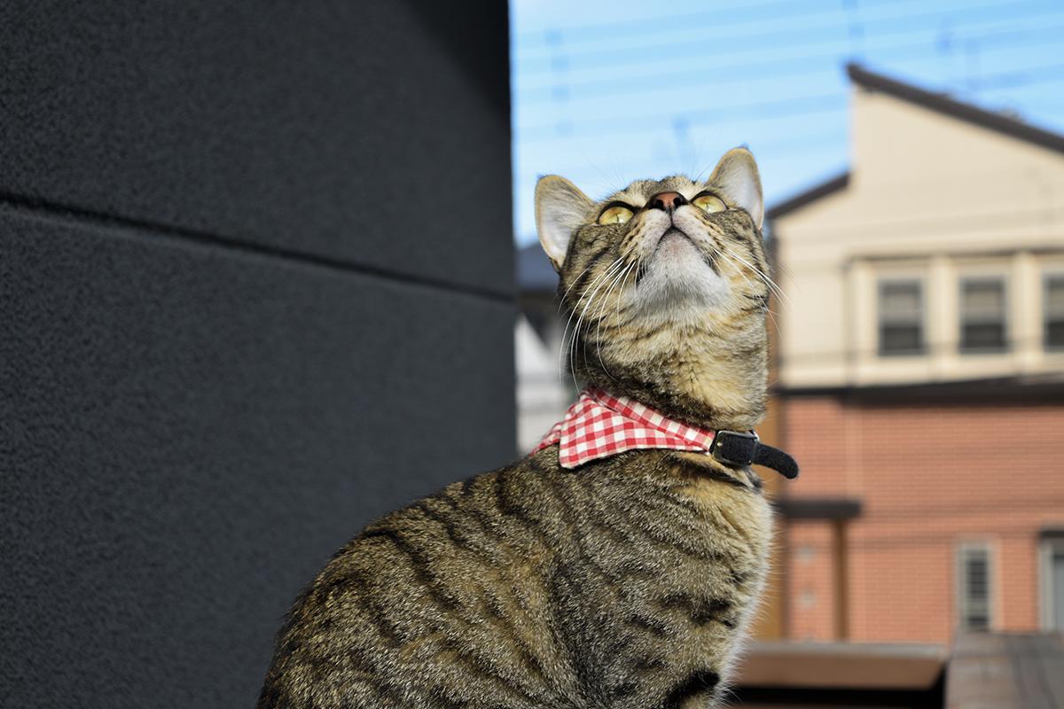 ベランダでお外の空気を満喫するキジトラ猫の虎ノ介