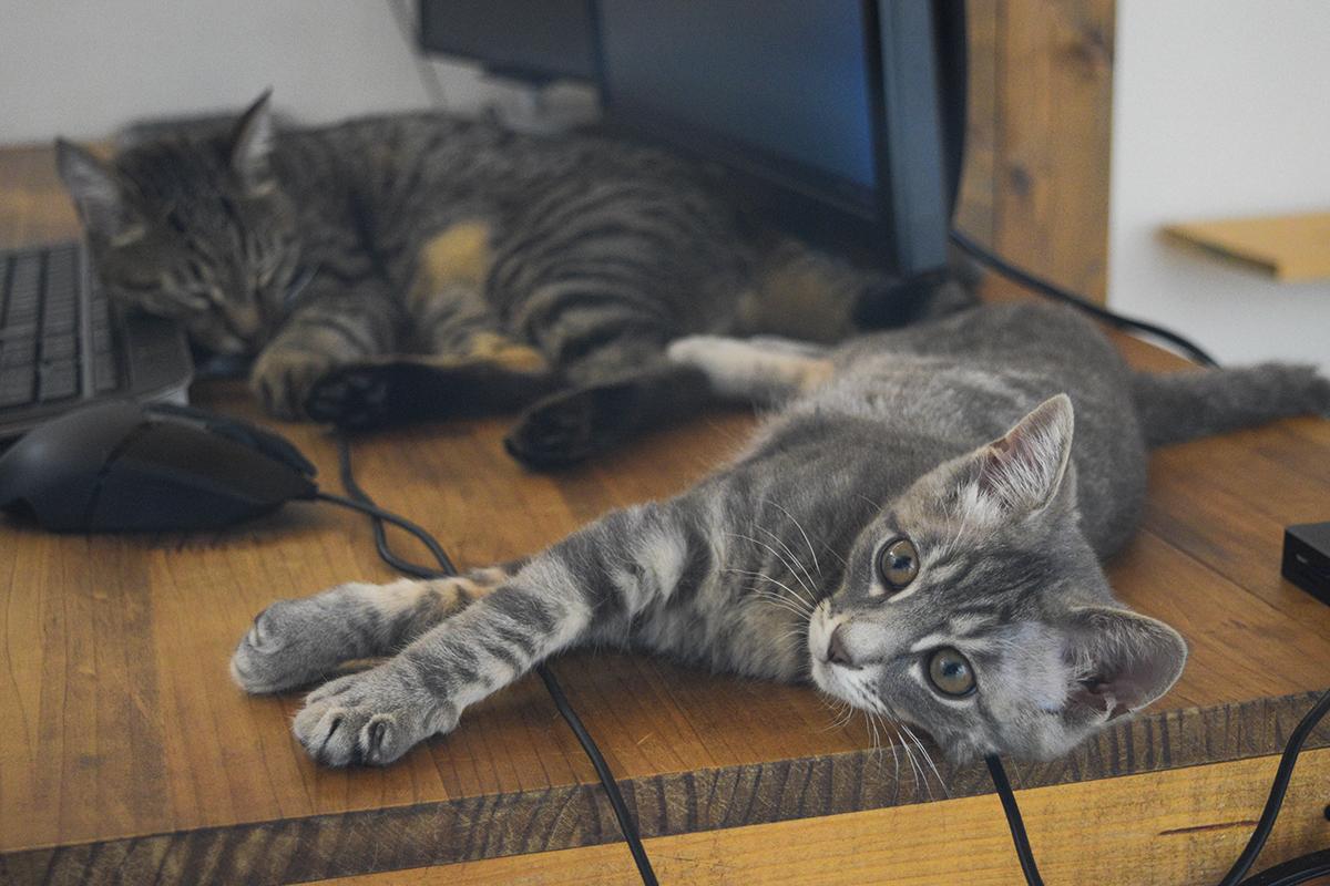 机で並んでのんびりするキジトラ猫の虎ノ介とサバトラ猫の春太