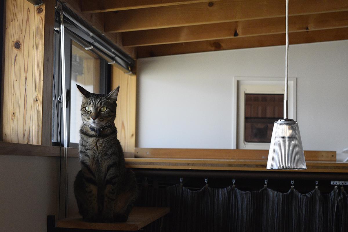 寝室のキャットウォークに座るキジトラ猫の虎ノ介とキャットドアの向こうから覗くサバトラ猫の春太