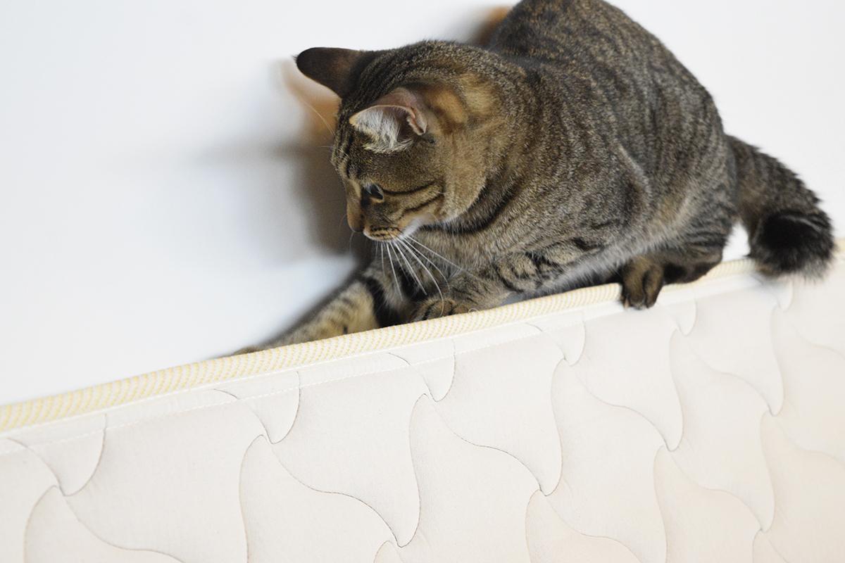 マットの上で遊ぶキジトラ猫の虎ノ介