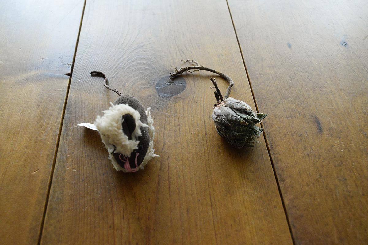 鼠のおもちゃと引っこ抜かれた多肉植物