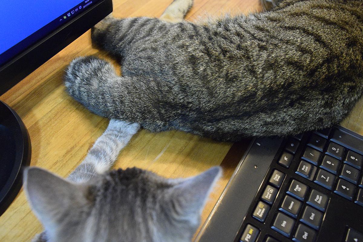 キジトラ猫の虎ノ介に少しだけ触れて眠るサバトラ猫の春太の手