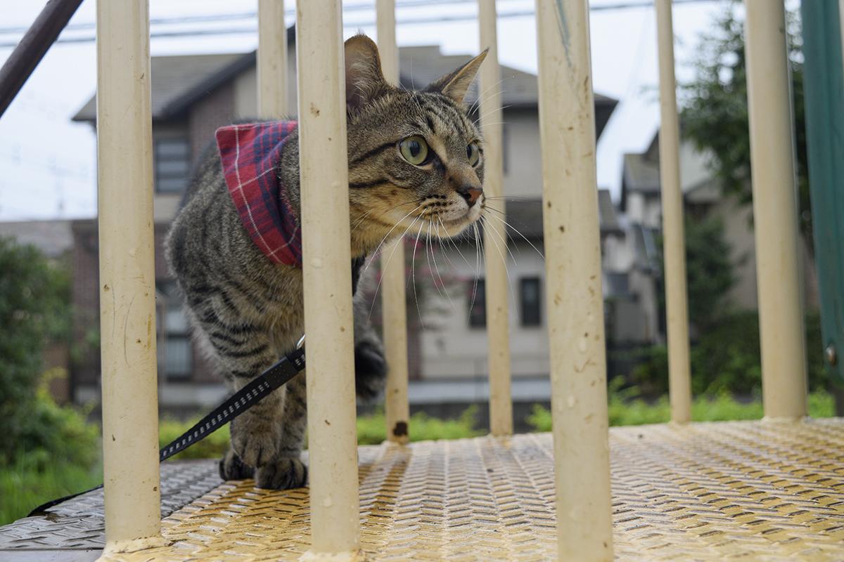 カラスを発見したキジトラ猫の虎ノ介