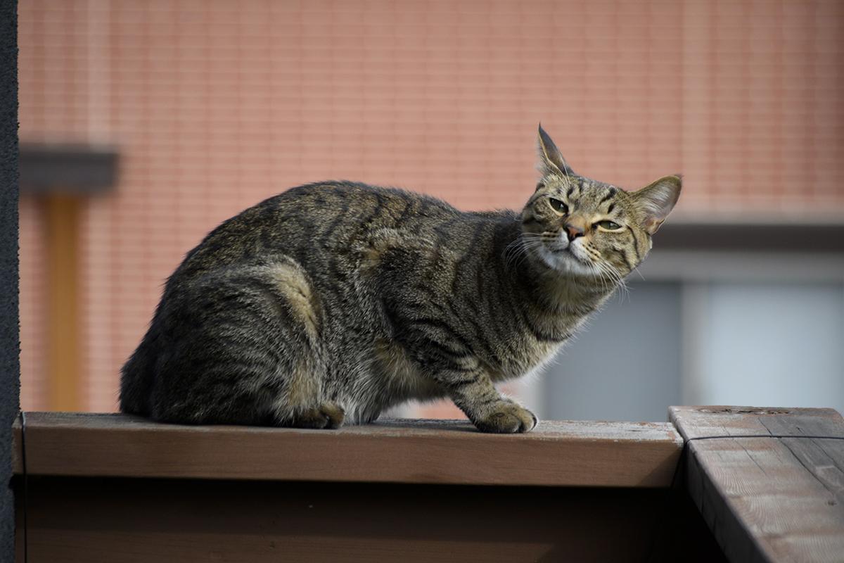 プチ家出を満喫するキジトラ猫の虎ノ介