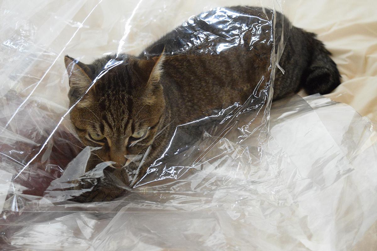 シャカシャカした袋にはいる虎ノ介
