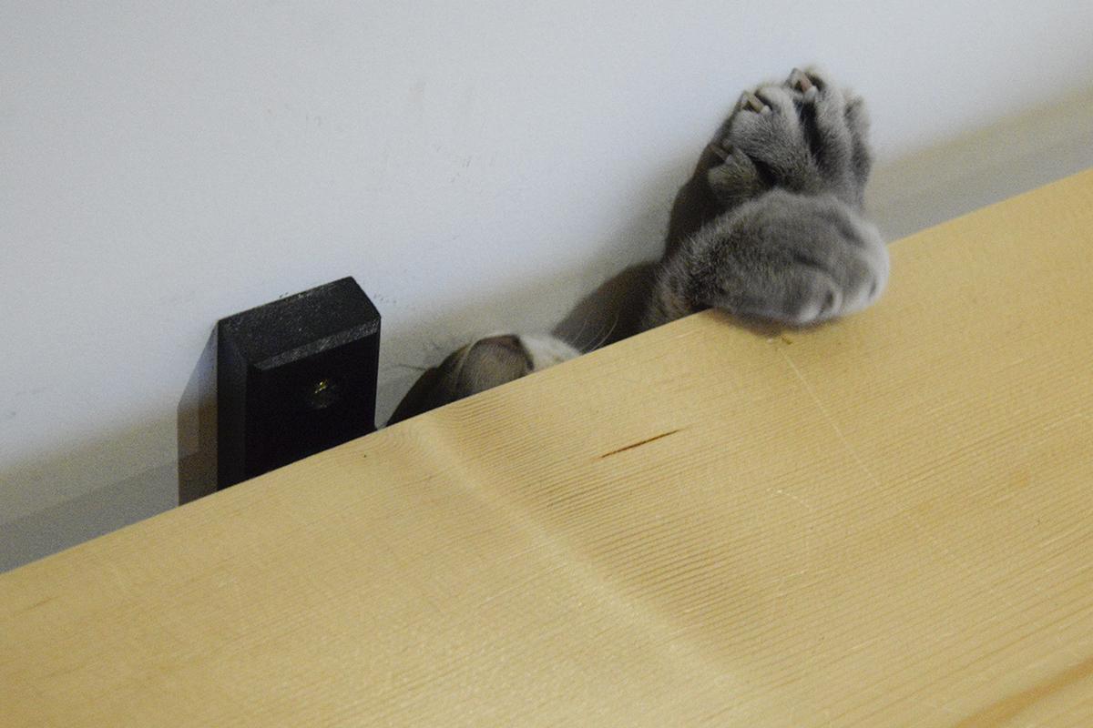 板の隙間から手と顔をだすサバトラ猫の春太