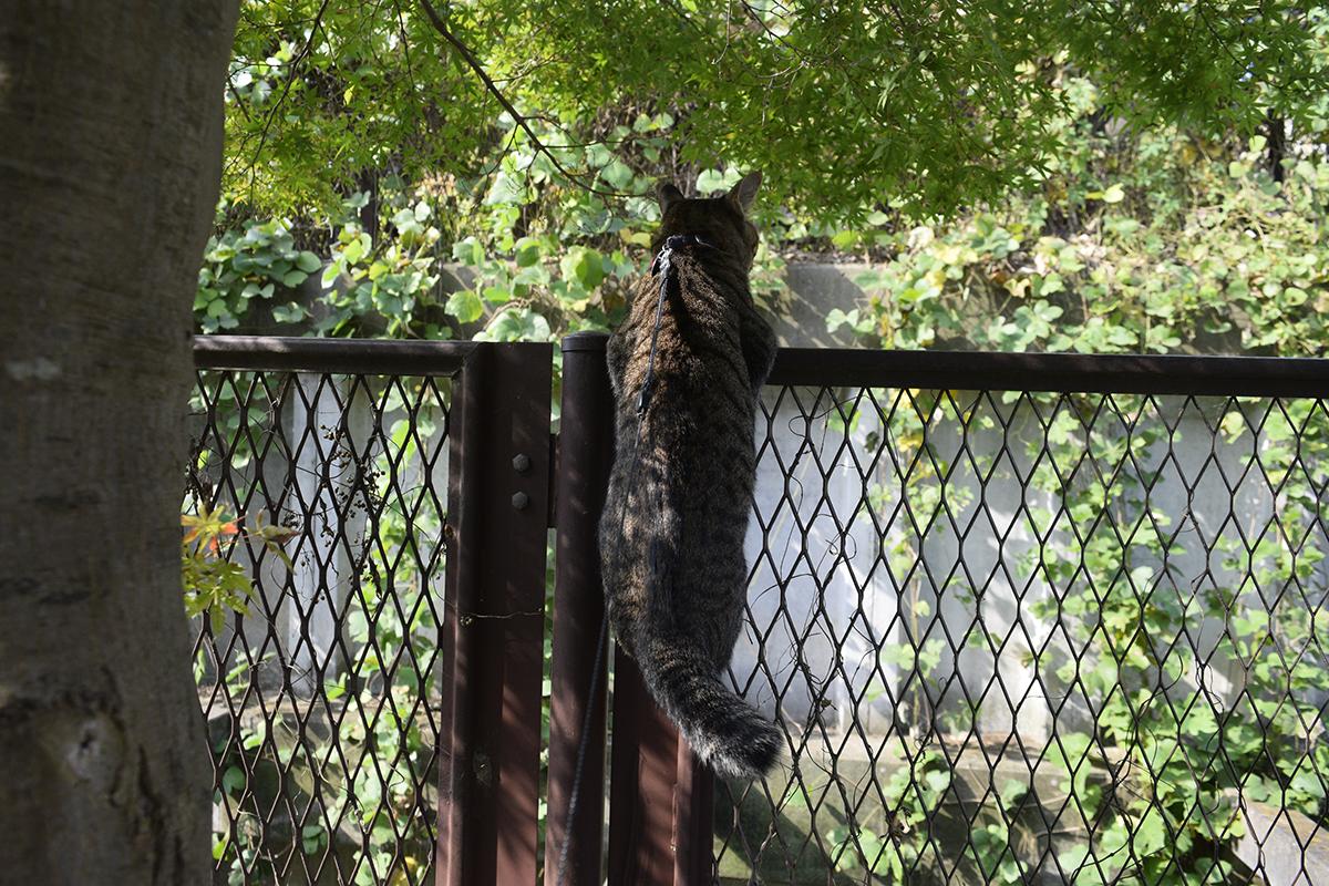 鳥を追いかけるキジトラ猫の虎ノ介