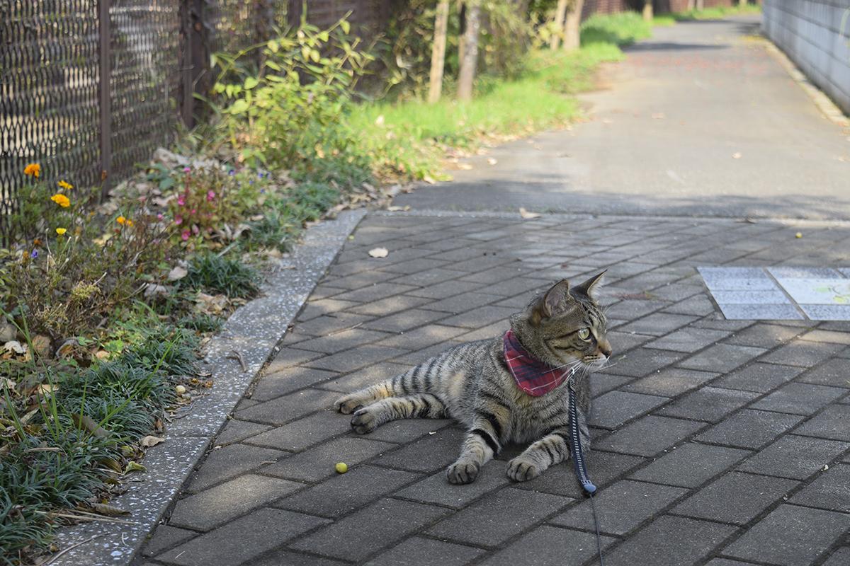 鳥を待つキジトラ猫の虎ノ介
