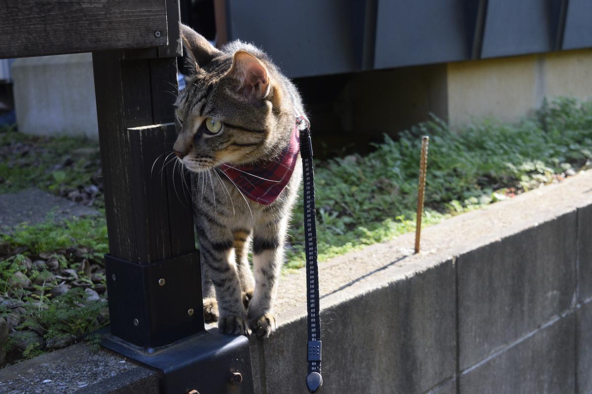 子供を発見したキジトラ猫の虎ノ介
