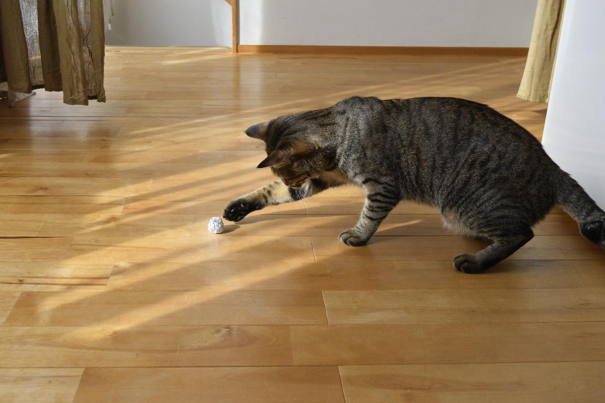 一人で遊ぶキジトラ猫の虎ノ介